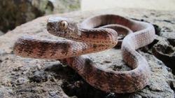 Ly kỳ rắn khổng lồ  bảo vệ rừng Phong Nha - Kẻ Bàng