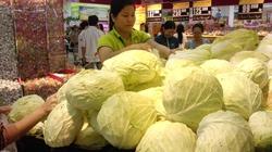 Vào mùa gieo trồng bắp cải: Chế độ dinh dưỡng thế nào?