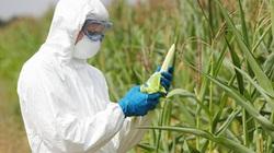 Lãnh đạo Bộ NNPTNT nói gì về cây trồng biến đổi gene?
