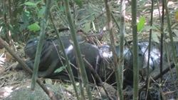 Kinh hoàng phát hiện xác chết bị cắt rời đầu trong rừng vắng