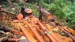 Khoảng 70 lâm tặc vây đánh hội đồng cán bộ bảo vệ rừng