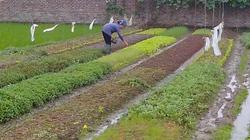 CẦN BIẾT: Kiến thức cơ bản về trồng rau VietGAP