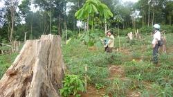 """Hàng loạt """"nhà đầu tư"""" đến Đăk Nông: Lập dự án để... phá rừng, bán đất"""