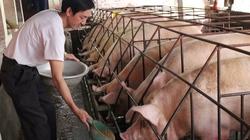 Bỏ làm ruộng mát tay nuôi lợn, đút túi trăm triệu
