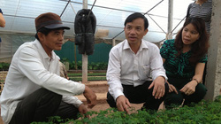 Việt Nam chi nửa tỷ USD nhập giống rau củ