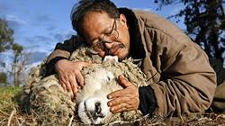 Con cừu... 17 tuổi nổi danh Facebook của Việt kiều Australia qua đời