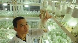 Về việc chi nửa tỷ USD nhập hạt giống: Phải chấp nhận mất tiền để học hỏi
