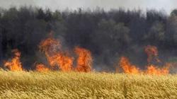 Lo ngại tăng phát thải khí nhà kính do nông nghiệp