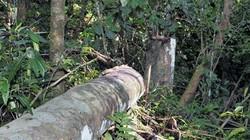 Quảng Bình: Một người bị gỗ đè tử vong trong rừng