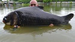 Cận cảnh cá chép khủng nhất thế giới vừa bị tóm gọn