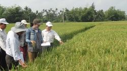 Quảng Nam: Khuyến nông gắn với nông thôn mới