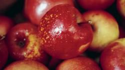 Cách phân biệt táo Trung quốc với táo New Zealand