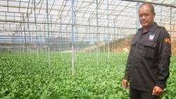 """Anh nông dân dưới chân núi LangBiang và nhà kính trồng rau bó xôi """"vàng ròng"""""""