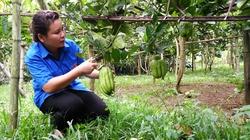 Vườn phật thủ tiền tỷ của cô gái trẻ xứ Thanh