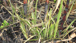 Các phương pháp phòng trừ sâu bệnh trên lúa và cây trồng