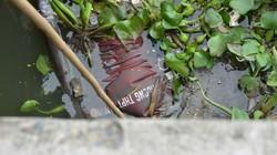 TP.HCM: Phát hiện thi thể nam sinh trôi trên kênh Nhiêu Lộc