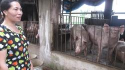"""Kiên trì """"sống chết"""" với nghề nuôi lợn"""