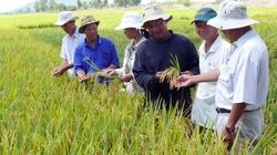 """""""Chăm chăm"""" phát triển lúa, bỏ mặc giống rau, hoa: Việt Nam bỏ tiền tỷ để lượm bạc cắc?"""