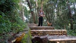 Phóng sự ảnh: Khu rừng thiêng nơi địa đầu