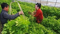 Nông nghiệp Trung Quốc dấy lên làn sóng sáp nhập