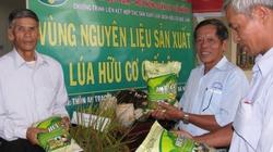 Bội thu với đồng lúa hữu cơ