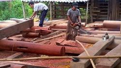 Làng quê nổi danh nhờ cui, đục, nông dân thành đại gia nhờ gỗ