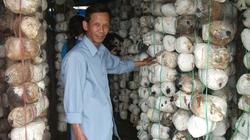 Quyết chí theo nghiệp trồng nấm, lãi ròng 100 triệu đồng/năm