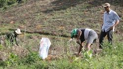 """Huyện nghèo miền núi Quảng Ngãi với mô hình """"khủng"""" trồng cây tỷ đô"""