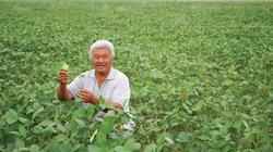 Dùng phân NPK Văn Điển cho cây đậu tương