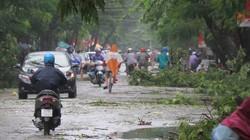 Chùm ảnh: Đường phố Hải Phòng ngổn ngang sau bão số 3