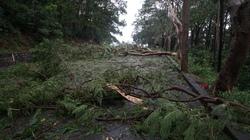 """Cơn bão tràn qua, cây lá """"phủ kín"""" Đồ Sơn"""