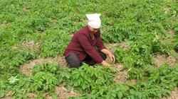 Hỏi - đáp nhà nông: Tại sao phân bón NPK-S Lâm Thao lại tốt hơn so với phân bón đơn?