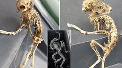 Phát hiện bộ xương giống hệt sinh vật ngoài hành tinh