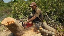 Dịch chổi rồng lan rộng ở phía Nam: Nhờ chuyên gia nước ngoài dập dịch