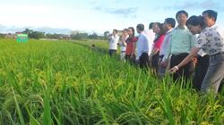 Khuyến nông trong xây dựng NTM: Hơn 9.000 mô hình sản xuất hiệu quả