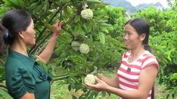 Giúp nông dân xứ Lạng  phát triển cây thế mạnh
