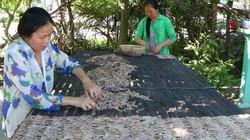 """Về An Giang, nơi nông dân kiếm bộn tiền từ """"kiều nữ chân dài"""""""