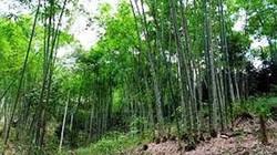 Hai mẹ con chết trong tư thế treo cổ ở rừng luồng