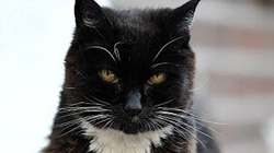 Chú mèo 115 tuổi già nhất thế giới