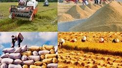 Hợp tác xúc tiến thương mại nông lâm sản