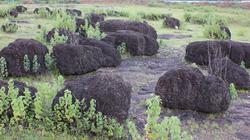 Ly kỳ khối đá lạ mang hình người cổ xưa ở Bình Phước