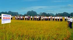 Phân NPK Ninh Bình giúp  giảm sâu bệnh, tăng năng suất