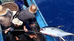 Bình Định:  Chọn ngư dân khai  thác cá ngừ kiểu Nhật