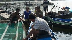 Quảng Nam: Bị phá bè cá, nông dân thiệt hại nặng