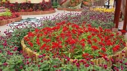 Đà Nẵng: Sử dụng hoa của nông dân trang trí đường phố Tết 2015