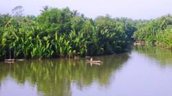 Về ăn dừa nước cửa sông