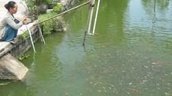Cách xác định độ pH phù hợp với cá nuôi không cần dụng cụ đo