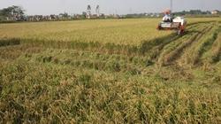 Nhiều hỗ trợ cho tam nông bắt đầu có hiệu lực từ ngày 1.7