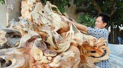 Người đam mê đẽo gỗ tạo hình ở An Giang