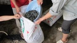 Kinh nghiệm vận chuyển cá giống giảm thiểu tối đa tỷ lệ chết